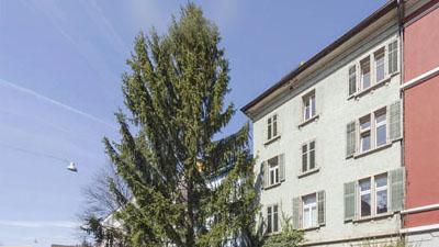Mehrfamilienhaus Burgstrasse